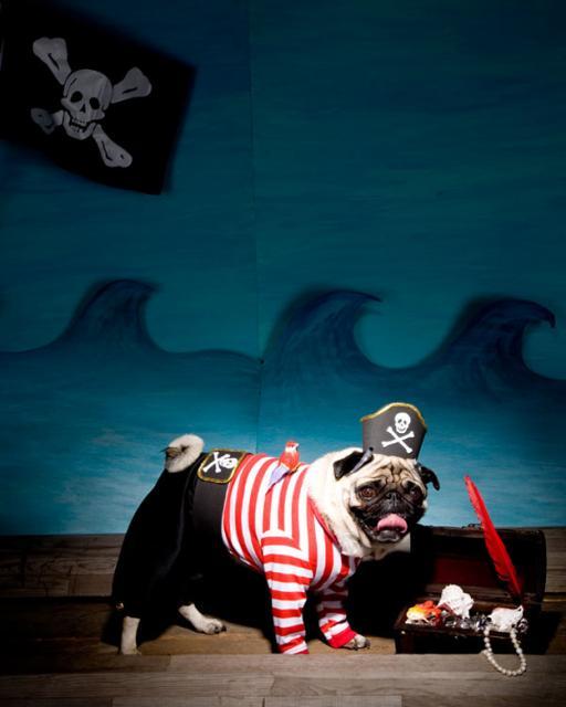 la capitaine du jour : chien pirate